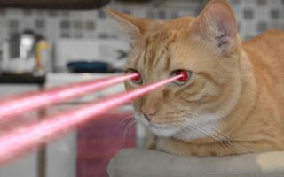 cat with a laser pointer on its eyes